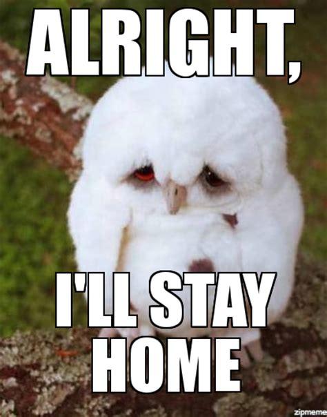 Sad Animal Memes - sad owl meme www imgkid com the image kid has it