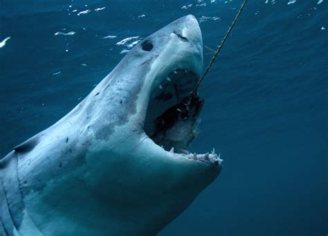 Latest Shark Incident Prompts Cape Cod Politician To Push