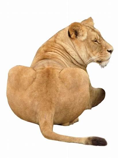 Lion Purepng Animal Transparent Panther Statue Cc0