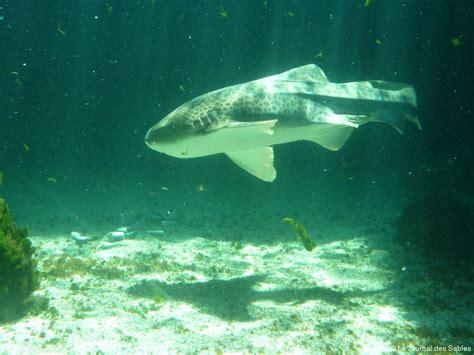 les sables d olonne aquarium 7e continent r 233 ouverture 4 jours apr 232 s l incendie 171 article 171 le