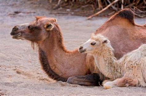 20 Animals That Live in the Desert