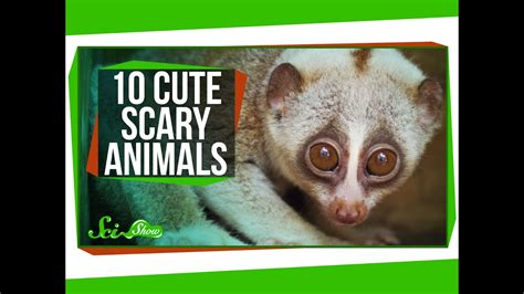 10 Cute Animals With Secretly Scary Behaviors YouTube