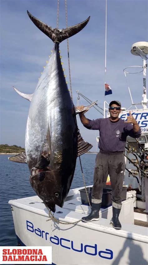 je li ovo najveca tuna ikad ulovljena  hrvatskoj