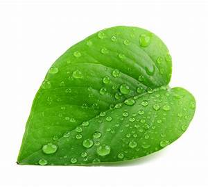 Greener Polymers | Green, compostable, naturally ...