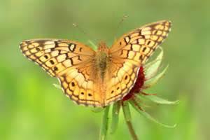 Butterfly Identification Guide