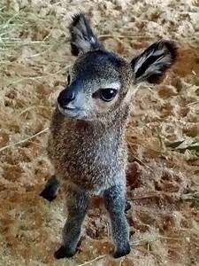 1000+ images about Antelopes on Pinterest | Kruger ...