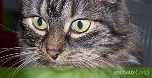 Vitesse Des Animaux : quiz des animaux domestiques sur ~ Medecine-chirurgie-esthetiques.com Avis de Voitures