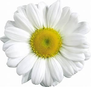 Transparent Daisy Flower Crown