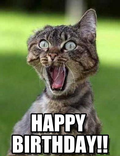 Happy Birthday Animal Meme - funny birthday meme google search funny animals pinterest happy happy birthday mom and