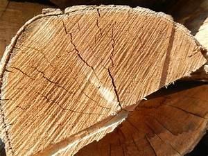 Bois De Chauffage Bricoman : bois de chauffage 50 cm sec onf molinario ~ Dailycaller-alerts.com Idées de Décoration