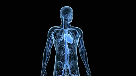 Medical 3d Animation Of The Beating Heart Stock Footage