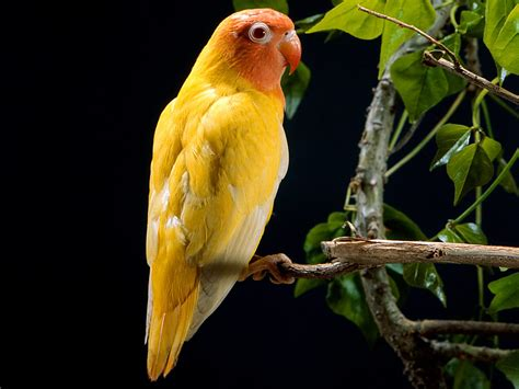 best wallpapers hd birds wallpapers hd