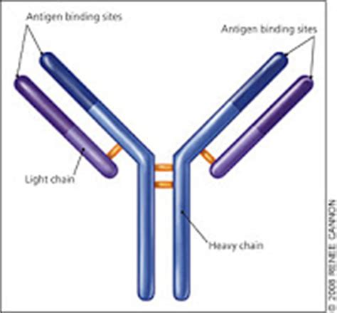 kappa light chain free renal fellow network serum free light chain assay