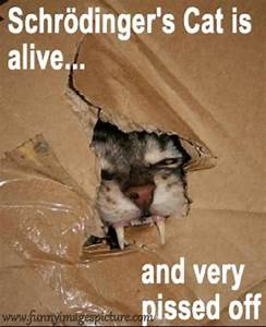 Funny Images Pictures And Quotes Greetings Sms: Funny Cat ...
