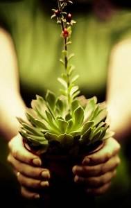 Plante Succulente Espèces Représentatives : les 224 meilleures images propos de plantes succulentes ~ Nature-et-papiers.com Idées de Décoration