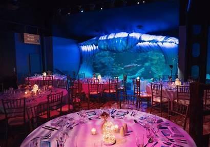 Parties Sydney Unique Most Aquarium Sea Redeem
