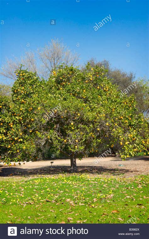 Garden Grove California by Garden Grove California Stock Photos Garden Grove