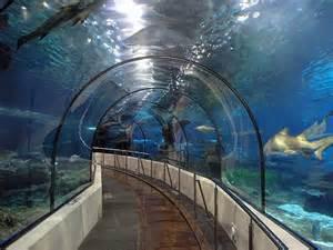aquarium de barcelone tarif enfants barcelone insolite