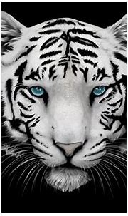 White Tiger Wallpaper High Definition Free Download ...