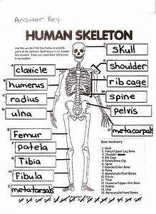 Skeleton Fill In The Blank Worksheet