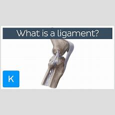 What Is A Ligament? Definition And Overview  Human Anatomy  Kenhub Youtube