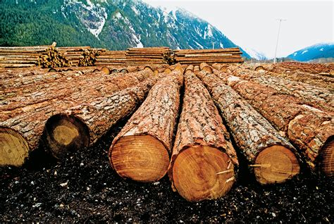forestry trees lumber  canadian business