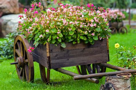 what to grow in a garden fast growing flowers to put in your garden bruzzese home