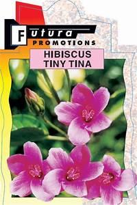 hibiscus tiny tina 250mm pot dawsons garden world