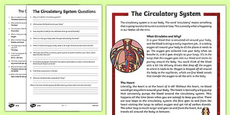 circulatory system differentiated reading