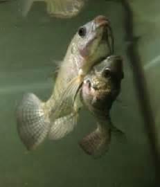 Exotic Fish Animals