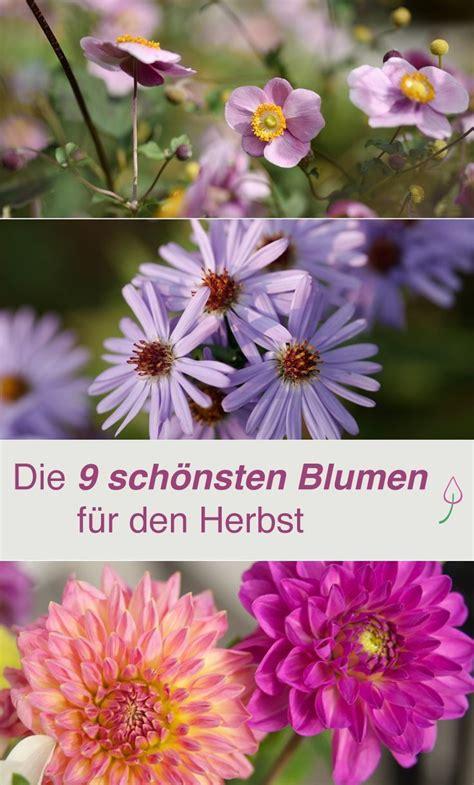 Herbst Blume Im Garten by Die 9 Sch 246 Nsten Blumen F 252 R Den Herbst Garten Im Herbst
