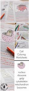 Pictures Of Plant And Animal Cells For Kids To Fill Out