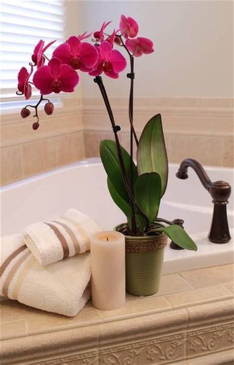 sophisticated orchids  elegant interior decorating