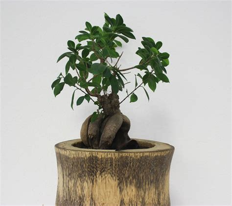 feng shui plants for office desk home office feng shui decor live plants out of the office