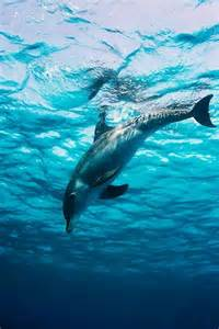 Beautiful Underwater Sea Life Dolphins