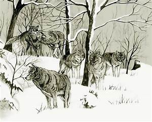 Timber Wolf Pack Drawing by Anthony Seeker