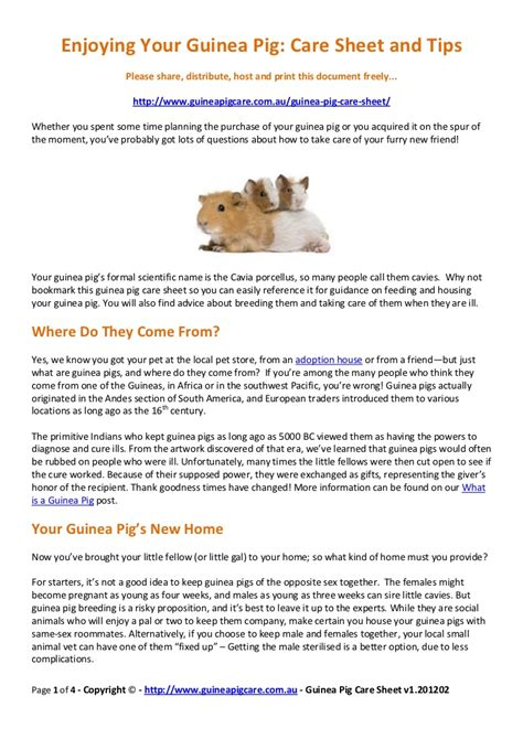 They teach kids the value of selflessness, compassion. Guinea pig-care-sheet