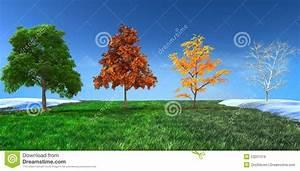 Achat Citronnier 4 Saisons : concept 3d quatre saisons images libres de droits image ~ Premium-room.com Idées de Décoration