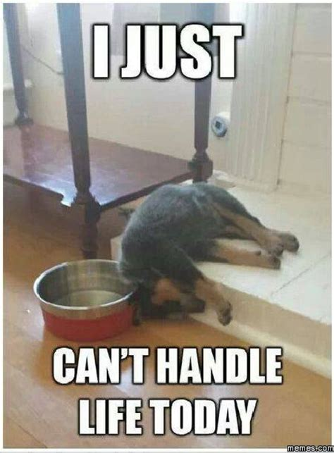 Fail Memes - funny dog fail meme