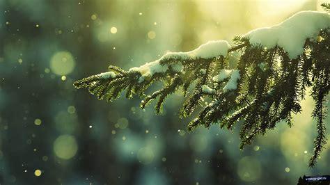 Mountain King Artificial Christmas Trees