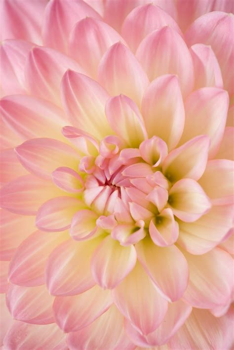 Wallpaper Of Hd Flower by Flower Wallpapers Free Hd 500 Hq Unsplash