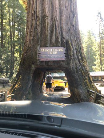 chandelier drive through tree chandelier drive through tree leggett ca top tips