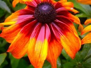 Blumen Bilder Gemalt : foto eine blume wie gemalt outdoor bilder ~ Orissabook.com Haus und Dekorationen
