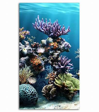 Coral Mobile Reef Phone Wallpapers Spliffmobile