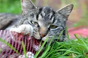 Was Brauchen Katzen : katzenfutter eine gesunde ern hrung f r den freund auf ~ Lizthompson.info Haus und Dekorationen