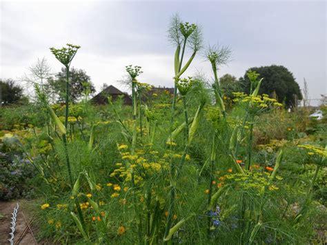 Garten Mieten Dortmund by Meine Ernte Miete Deinen Gem 252 Segarten In Dortmund