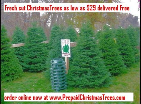 christmas trees salt lake city free images at clker com