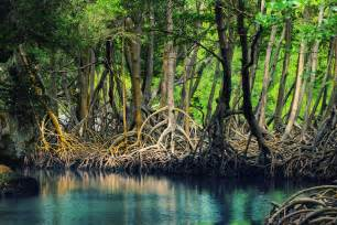 Destructive Effect of Mangrove Shrimp Farming. « Dairyland
