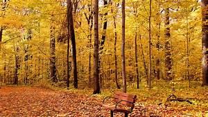 Autumn wallpaper - 495434