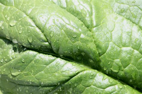 Water Drops on Leaf Texture Picture | Free Photograph ...